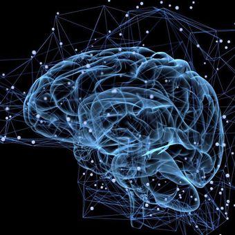 Как устроен и работает наш мозг