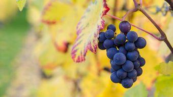 Гид по винной культуре