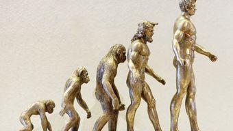 История человека: от происхождения планеты до букваря