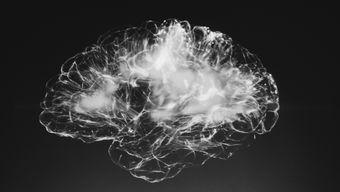 Как работают сети в мозге