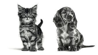 Паблик-ток «Что делать, если у вас появился щенок или котёнок»